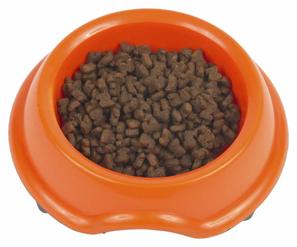 Dog food for Jack Russells