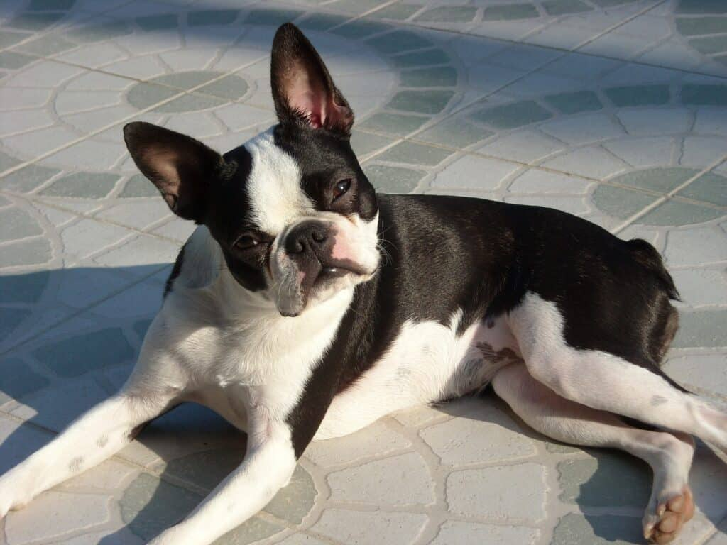 Dog sitting on the ground