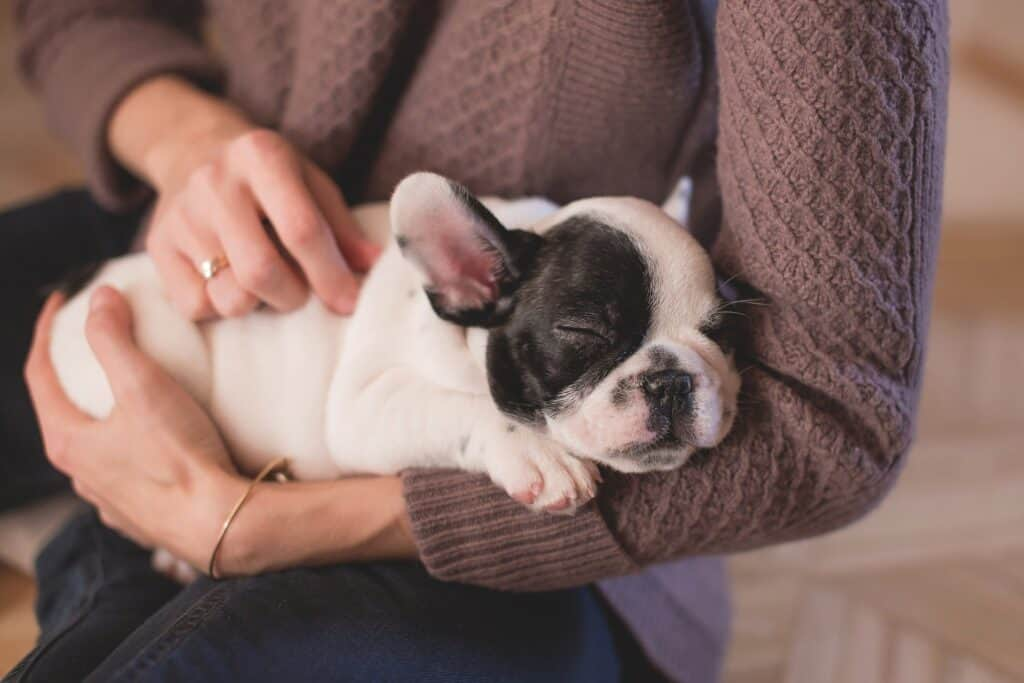 Person cradling a puppy