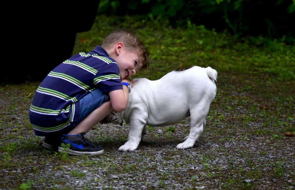 Little boy snuggling a Boston Terrier