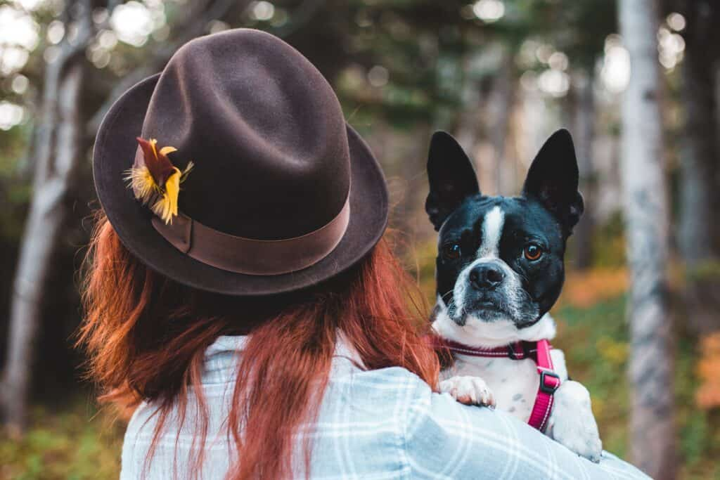 Woman carrying a Boston Terrier