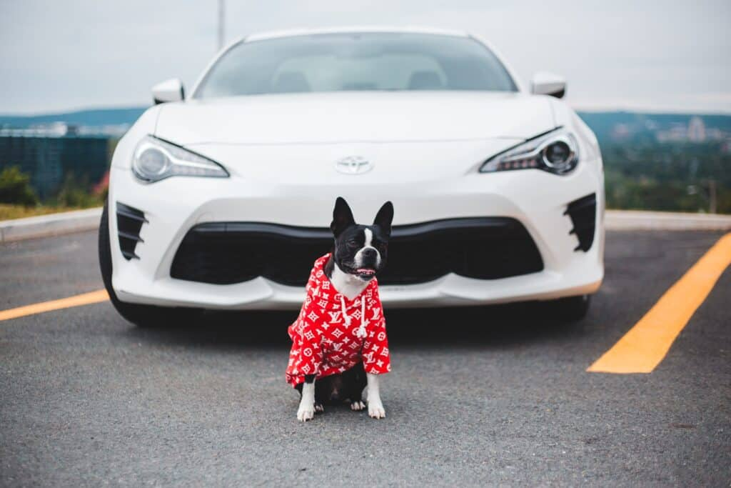Dog with red clothing sitting in front of a white car