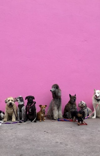 Different types of dogs on a playdate