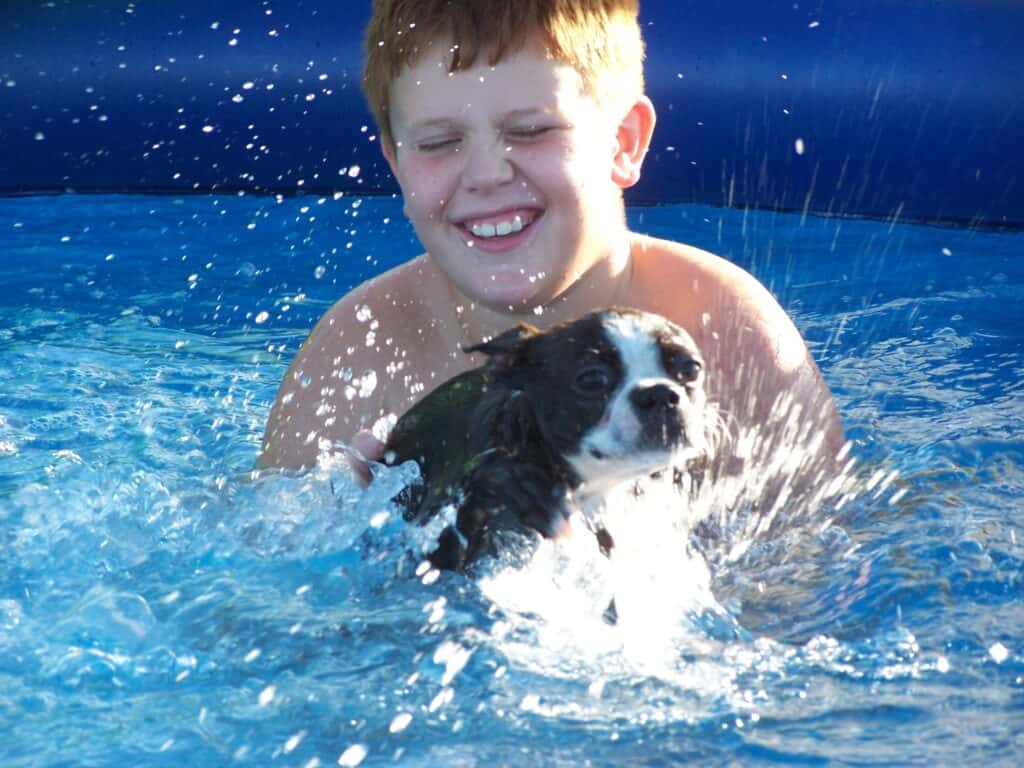 Little boy testing to see if his Boston Terrier is a good swimmer
