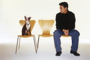 Man wondering if his Boston Terrier is hypoallergenic