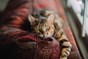 Cat lounging in a sofa