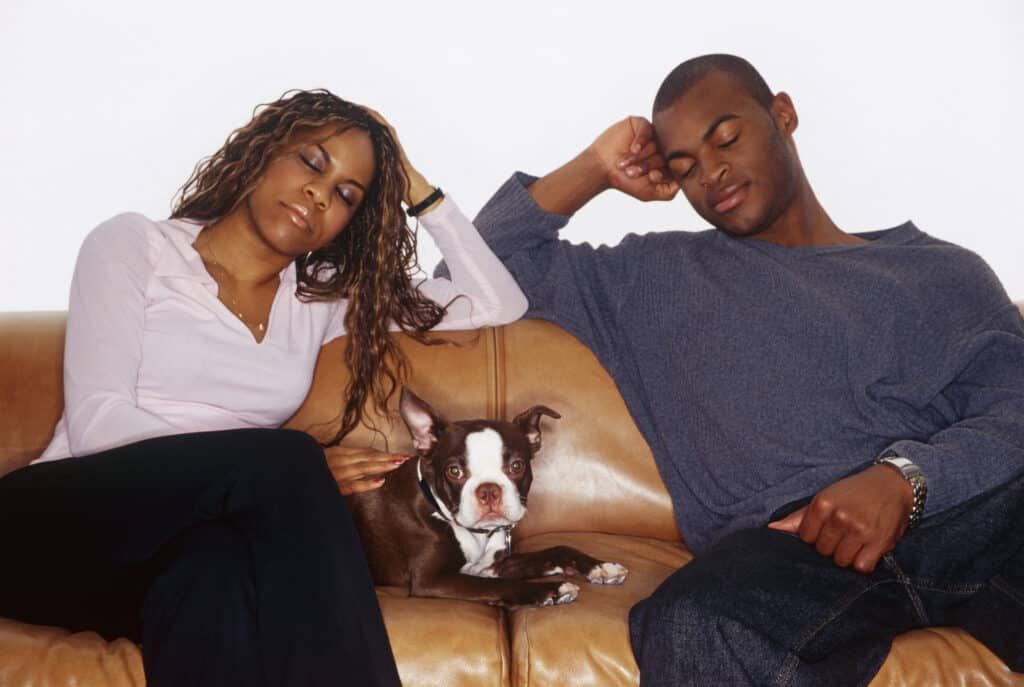 Couple sitting on the couch with their Seal Boston Terrier