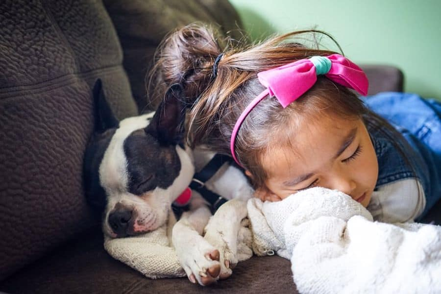 Boston Terrier puppy and little girl sleeping beside each other