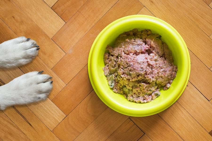 Boston terrier paws beside bowl with dog food