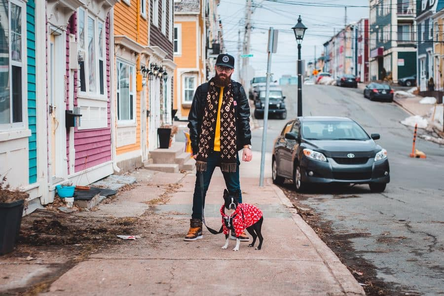 Man walking his Boston Terrier during cold weather